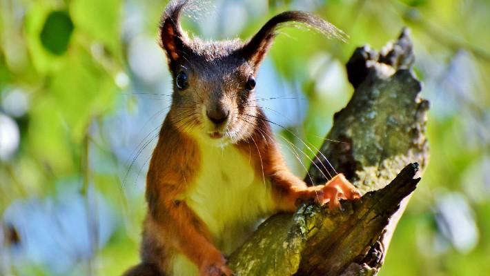 Eichhörnchen-App