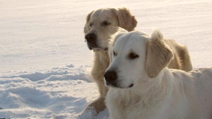 Luna & Balu - die beliebtesten Hundenamen 2020
