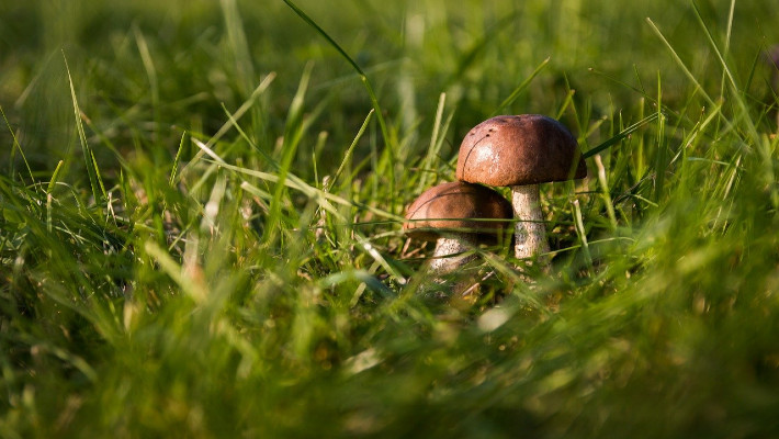 Tipps fürs Pilze sammeln